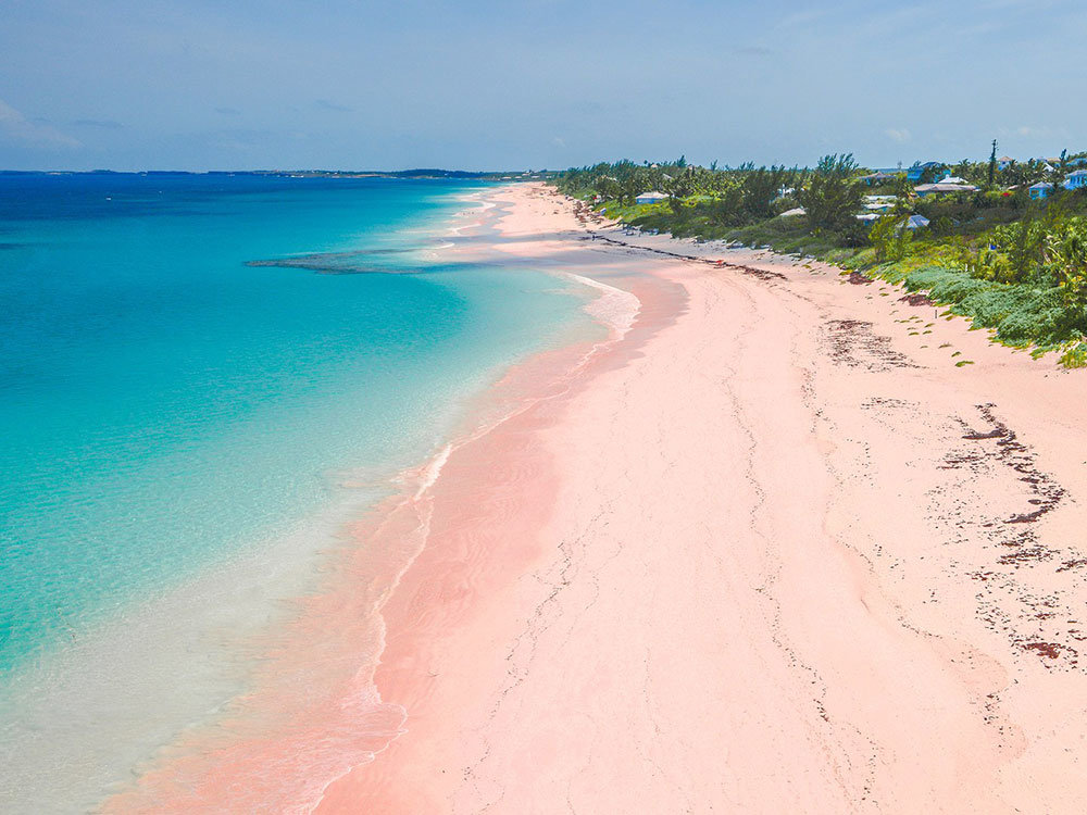 pink sands beach.jpeg